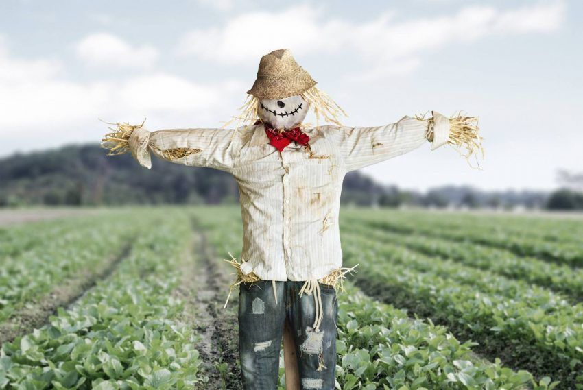 Field Scarecrow